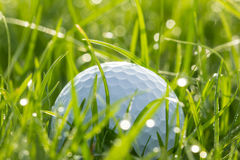 Golf ball on grass with bokeh. Of drops water Stock Image