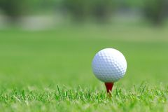 Golf ball in grass on the field royalty free stock image