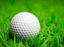 Golf Ball in grass field Stock Photos