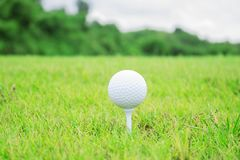 Golf ball on grass. Golf ball on grass with green background Stock Photography