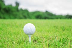 Golf ball on grass. Royalty Free Stock Images
