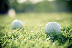 Golf ball on grass Stock Image