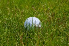 Golf ball grass. Single ball for golf in the grass stock image