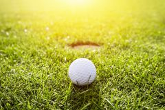 Golf ball on a grass. Sunshine. Golf ball on a course at the sunset. Focus on the ball. Golfing Royalty Free Stock Image