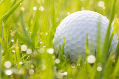 Golf ball on grass with water drops Royalty Free Stock Image