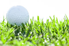 Golf ball on grass with water drops. Golf ball on green grass with water drops Royalty Free Stock Images