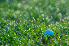 Golf Ball in Grasses with Dew Drops in Morning. In morning a white golf ball in short green grasses with lots of dew drops defocused into circular light spots in Royalty Free Stock Photo