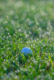 Golf Ball in Grasses with Dew Drops in Morning. In morning a white golf ball in short green grasses with lots of dew drops defocused into circular light spots in Stock Images