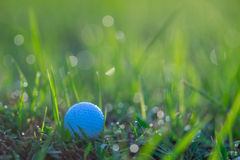 Golf Ball in Grasses with Dew Drops in Morning. In morning a white golf ball in short green grasses with lots of dew drops defocused into circular light spots in Stock Image