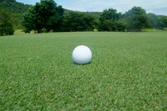 Golf ball on green. With trees in the background Stock Photography