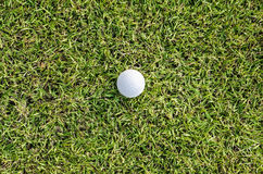 Golf ball on the green.  stock photography