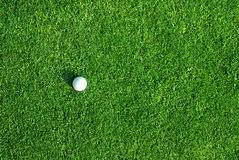 Golf ball on the green. Close up of a golf ball on the green Stock Image
