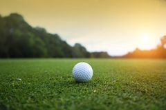 Golf ball on green in beautiful golf course with sunset. Golf ba. Ll close up in golf coures at Thailand royalty free stock photo