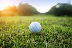 Golf ball on green in beautiful golf course with sunset. Golf ba. Ll close up in golf coures at Thailand stock photos