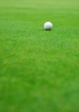 Golf ball on the green Stock Images