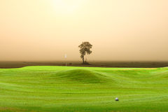 Golf ball on green Royalty Free Stock Images