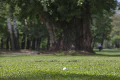 Golf ball on the green. Detail golf course Stock Images
