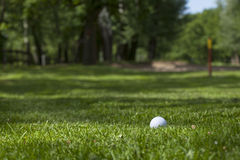 Golf ball on the green. Detail golf course Royalty Free Stock Image