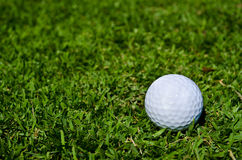 A golf ball on green field. A white golf ball on green glass Royalty Free Stock Photography