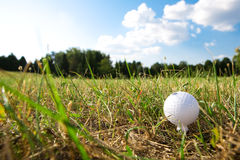 Golf-ball on green grass Stock Photo