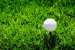 Golf ball on the green grass Stock Image