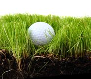 Golf ball in the green grass Stock Photo