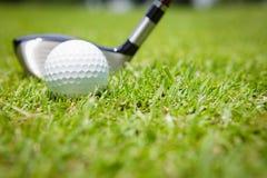 Golf ball in green grass Stock Photography