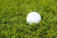 Golf ball on the green grass Stock Photo