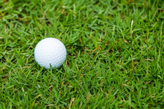 Golf ball on the green grass. Background Royalty Free Stock Photos