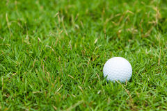 Golf ball on the green grass. Background Royalty Free Stock Photography
