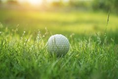 Golf ball on green grass in beautiful golf course at sunset background. Golf club and golf ball on green grass in the evening golf course with sunshine in stock photos