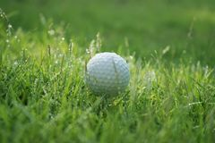 Golf ball on green grass in beautiful golf course at sunset background. Golf club and golf ball on green grass in the evening golf course with sunshine in royalty free stock images