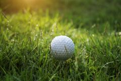 Golf ball on green grass in beautiful golf course at sunset background. Golf club and golf ball on green grass in the evening golf course with sunshine in royalty free stock image