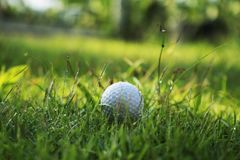 Golf ball on green grass in beautiful golf course at sunset background. Golf club and golf ball on green grass in the evening golf course with sunshine in stock photo