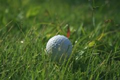 Golf ball on green grass in beautiful golf course at sunset background. Golf club and golf ball on green grass in the evening golf course with sunshine in stock photography