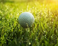 Golf ball on green grass in beautiful golf course at sunset background. Golf ball on green grass in the evening golf course with sunshine in thailand royalty free stock images