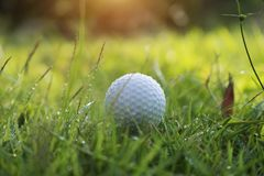 Golf ball on green grass in beautiful golf course at sunset background. Golf ball on green grass in the evening golf course with sunshine in thailand royalty free stock image