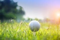 Golf ball on green grass in beautiful golf course at sunset background. Golf ball on green grass in the evening golf course with sunshine in thailand royalty free stock photos