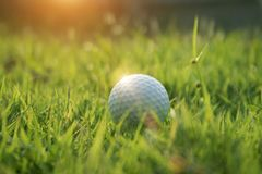 Golf ball on green grass in beautiful golf course at sunset background. Golf ball on green grass in the evening golf course with sunshine in thailand royalty free stock photography