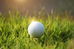 Golf ball on green grass in beautiful golf course at sunset background. Golf ball on green grass in the evening golf course with sunshine in thailand stock photos