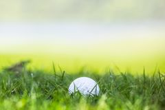 Golf ball on green grass Stock Photos