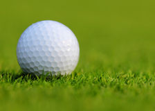 Golf ball on green grass. Stock Photography