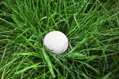 Golf ball on green grass. Closeup Stock Photo