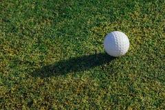 Golf ball on green grass. Closeup view Royalty Free Stock Photo