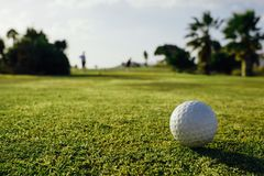 Golf ball on green grass, closeup view. Golf ball on green grass, palm trees background, close-up view Royalty Free Stock Image