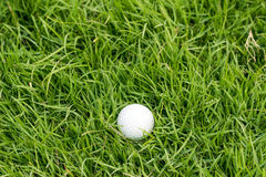Golf ball on green grass. Royalty Free Stock Images