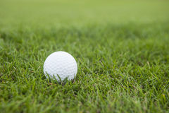 Golf ball on green grass detail view. Close up Royalty Free Stock Photo
