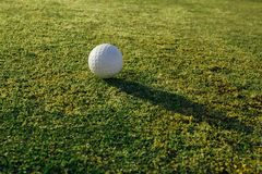 Golf ball on green grass. Closeup view Stock Images