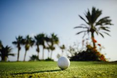 Golf ball on green grass. Palm trees background Royalty Free Stock Image