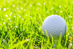 Golf ball in green grass. Macro of a golf ball in green grass Royalty Free Stock Photography